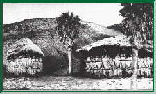 Palm frond shelters